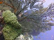 Brilliant underwater colors in Fiji