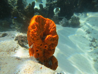 Underwater color