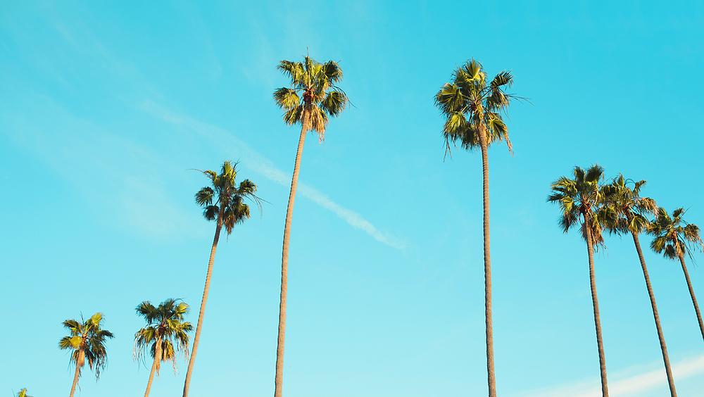 ¿Por qué en LA te apetece comer alimentos orgánicos y hacer yoga?