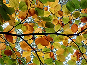 Autumn%20leaves_edited.png