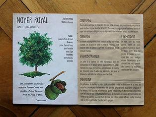 arbres bienfaiteurs editions du bois carré illustration nature lucie fiore