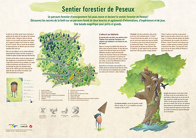 sentier forestier illusté Peseux