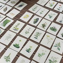 photo plantes.jpg