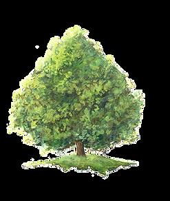 arbres bienfaiteurs editions du bois carré illustration nature lucie fiore tilleul