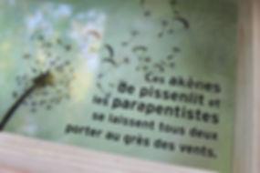 Lucie Fiore Illustration Pro Natura Genève Biomimétique