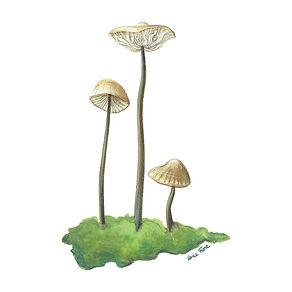 vie buissonniere editions de terran guide nature lucie fiore illustration marasme