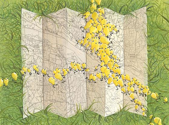 Lucie Fiore illustration biomimétisme myxomycète GPS