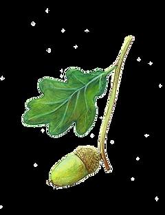 arbres bienfaiteurs editions du bois carré illustration nature lucie fiore gland