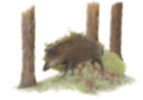 Lucie Fiore Illustration Laie et marcassins Agenda Nature Wapiti
