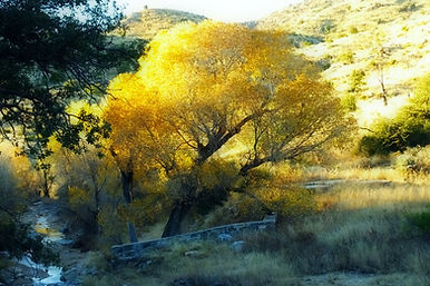 golden fall trees stone wall stream mountain valley Mt Lemmon AZ