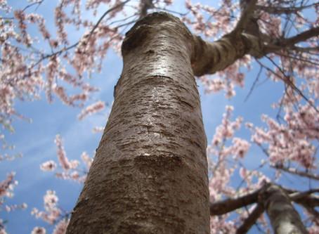 Ya es primavera en Casa El Almendro