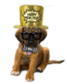 2020 new years puppy with hat.png