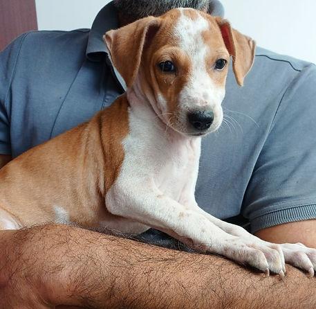 rescued-stray-dog.jpg