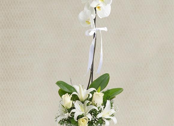 Güller ve Orkide