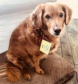 Pet Therapist Farley