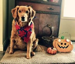 Farley Ready for Halloween