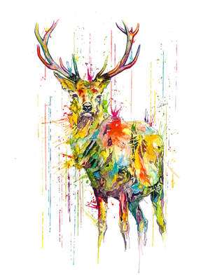 DEER- RAINING COLOURS *Limited Edition Giclée Print on Watercolour Paper - 300gsm.