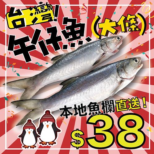 本地魚欄直送 - 台灣午仔魚(馬友魚) 大條裝 (約300g)