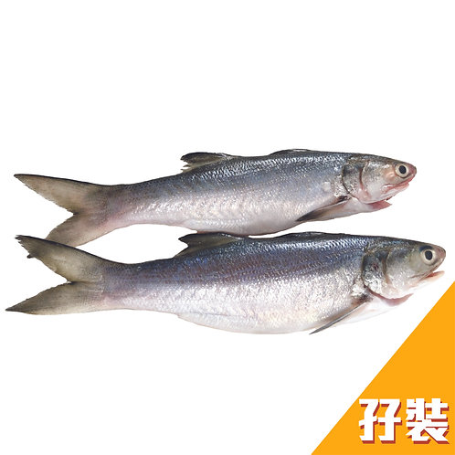 台灣鮮味直送 - 午仔魚(馬友魚) 兩條裝 400g