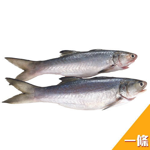 台灣鮮味直送 - 午仔魚(馬友魚) 1條裝(約270g)