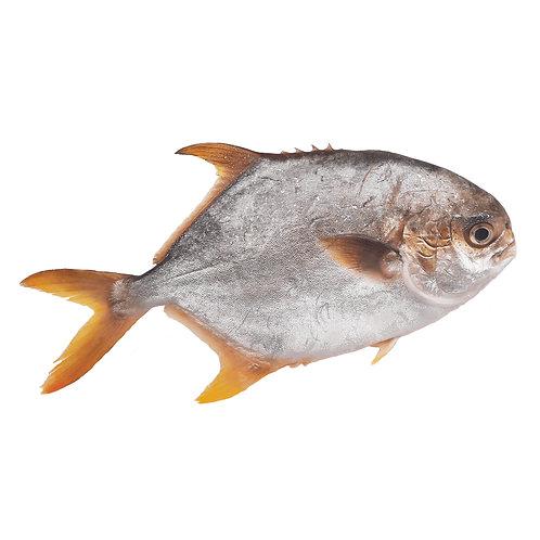 [魚欄直送]黃立倉一條裝270g+ (急凍)