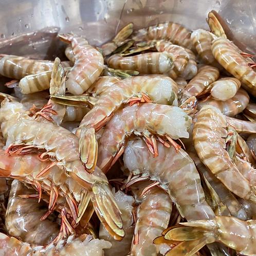 澳洲海捕野生去頭老虎蝦250g 3份