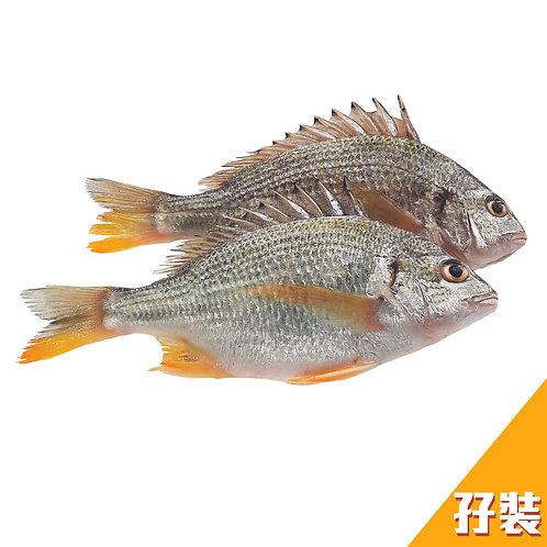 [魚欄直送]黃腳鱲孖裝310g+(已三清) (急凍)