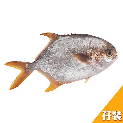 [魚欄直送]黃立倉孖裝460g+(已三清) (急凍)