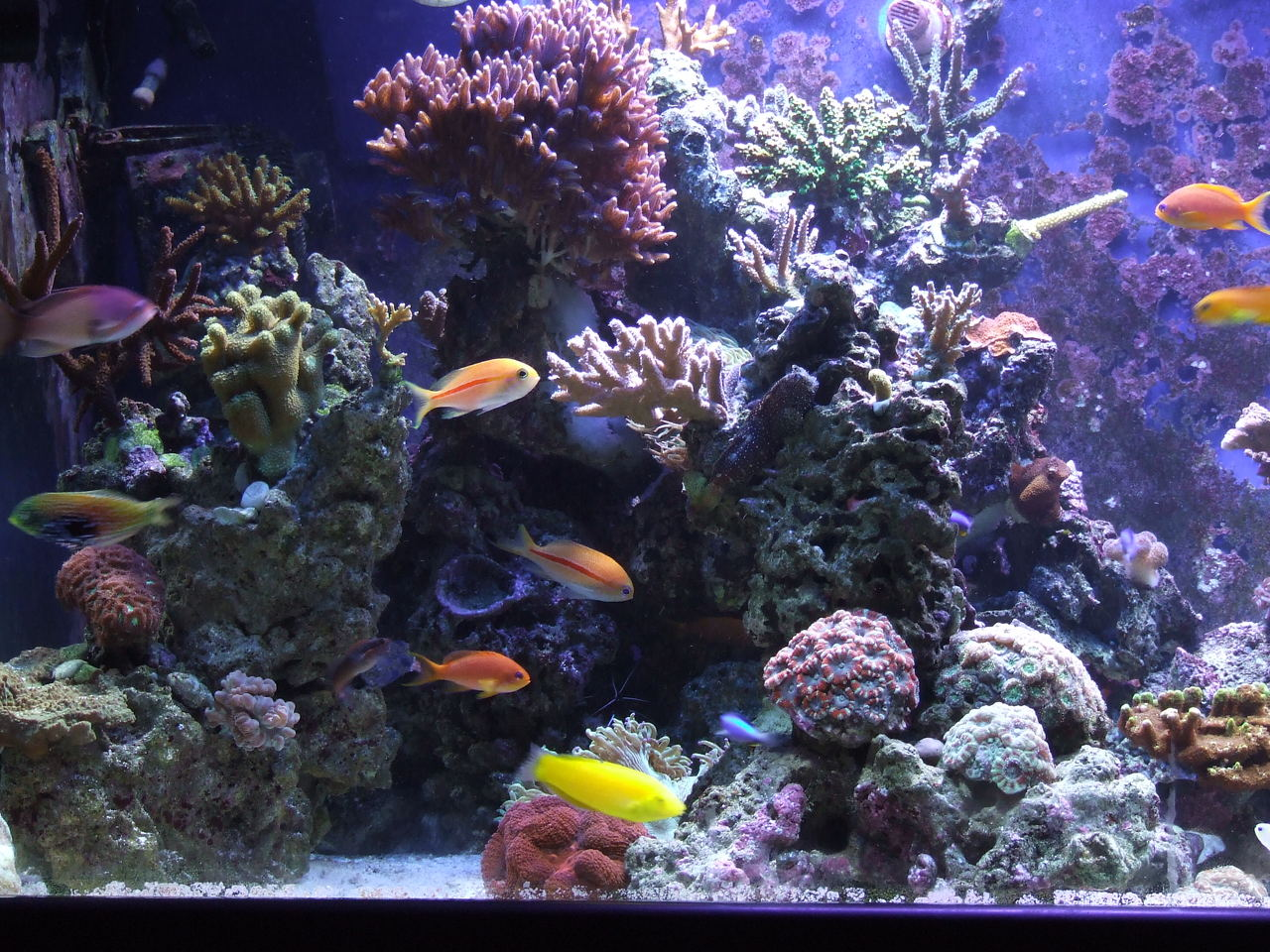 Saltwater reef close up.