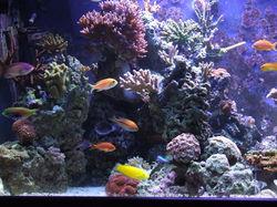 Saltwater reef close up.