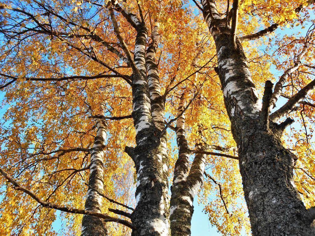 осень (1).jpg