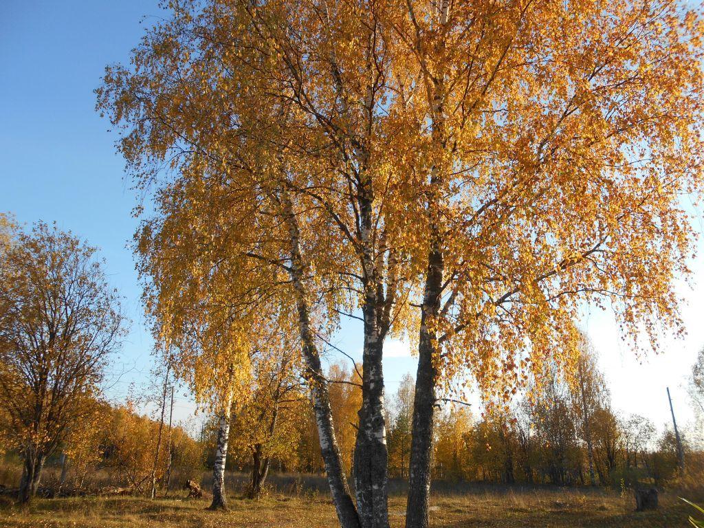 осень (3).jpg
