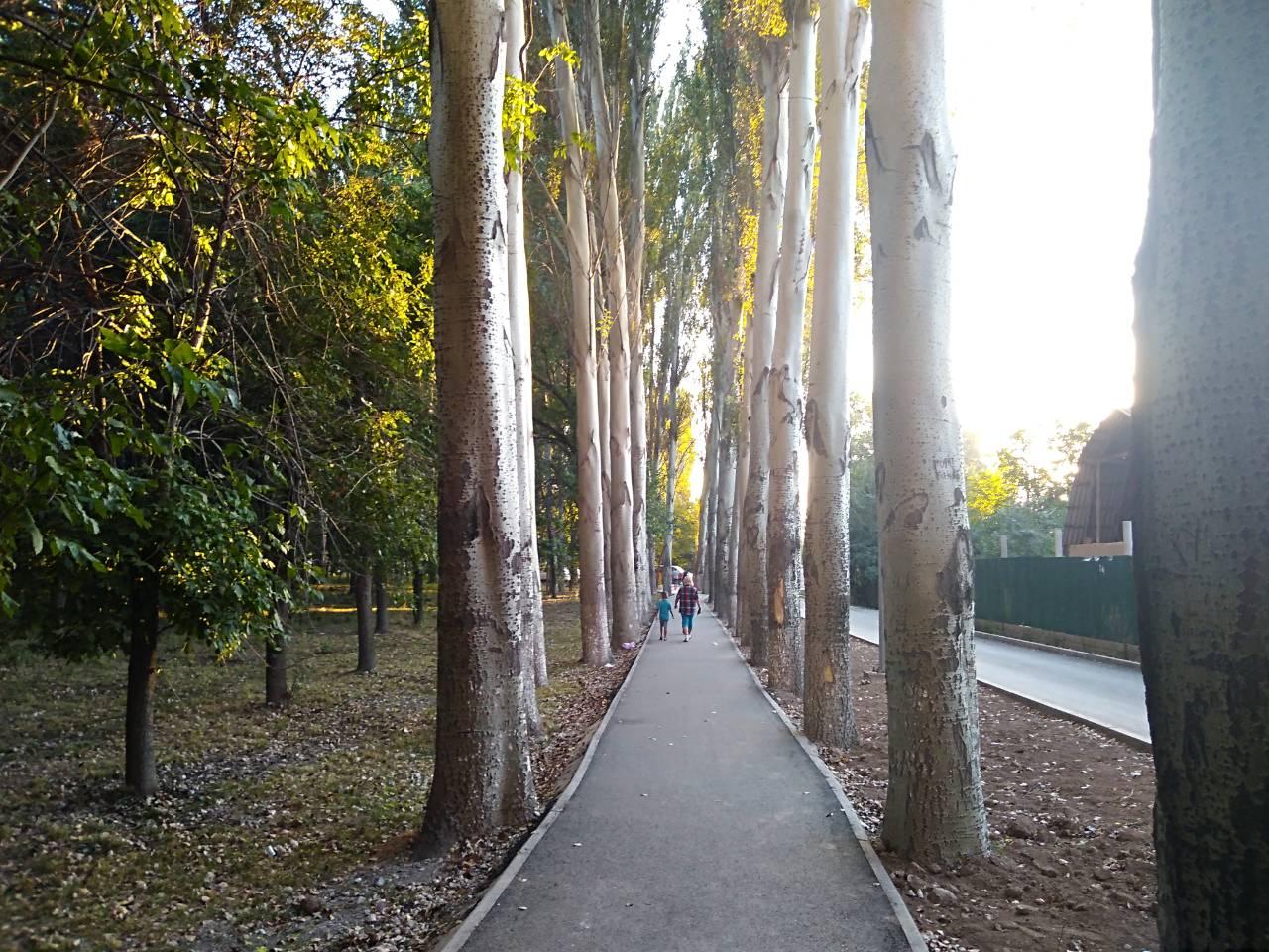 Карагачёвая роща в Верёвочном парке