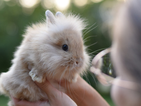 Allergies and Bunnies! What you need to know...