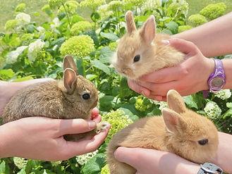 Precious Bunnies