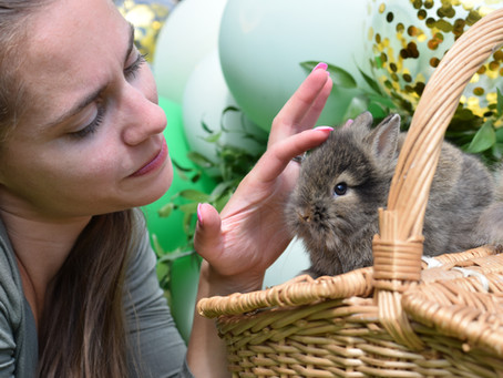 How much do you need on average to maintain having a bunny?