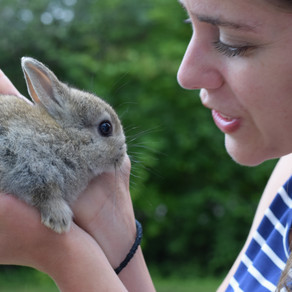 Is a Cutest Bunny the right pet for you... or your family for a Cutest Bunny?