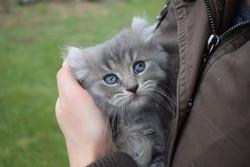 Plush Fur and Gorgeous Eyes