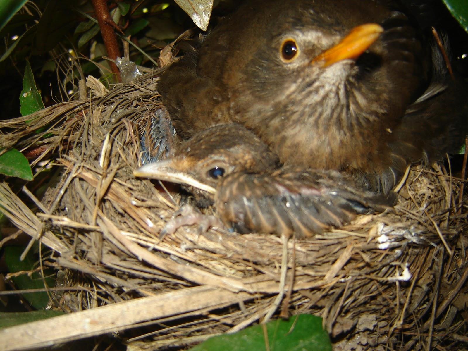 THOU SHALT NOT EAT THE MOTHER BIRD