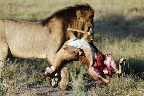 DO NOT EAT ANY ANIMAL KILLED