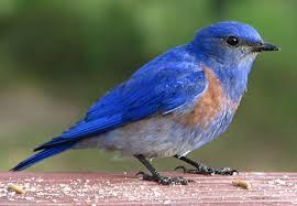 THOU SHALT EAT CLEAN BIRDS