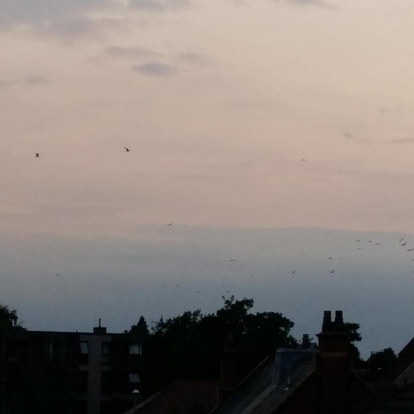 Sunset in Charlton