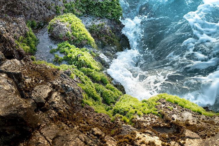 Green sea moss on rocks with sea waves.