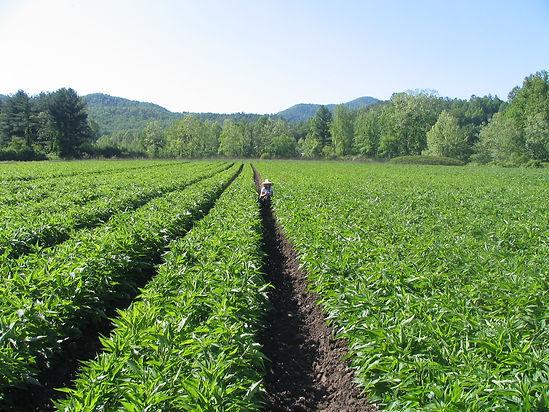 step1-Farm.jpg