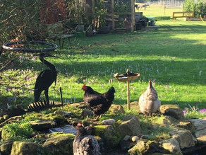 Half Term Availability at our Hampshire Farm