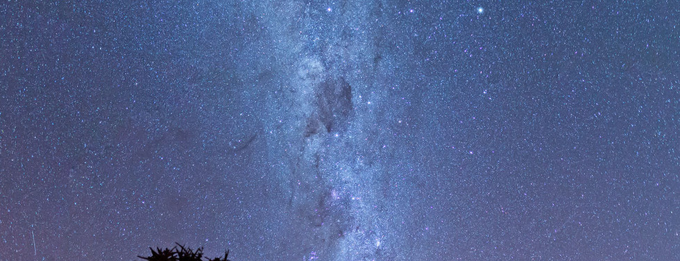 Milky way over quiver trees