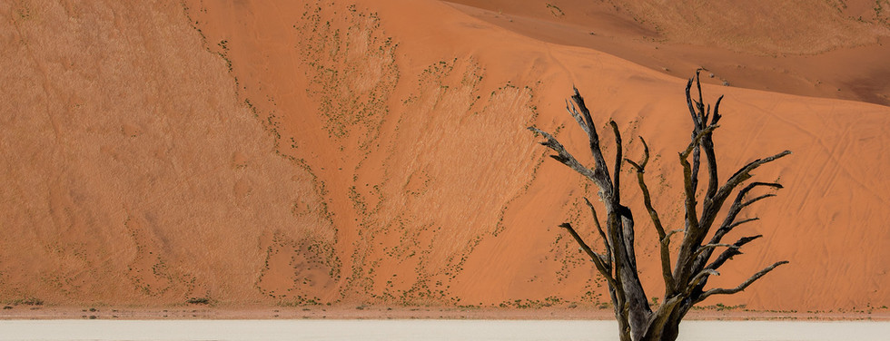 Lone quiver tree in deadvlei