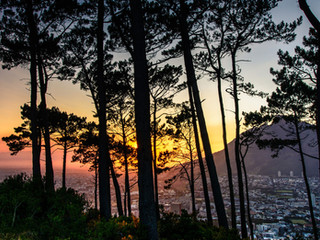 Signal Hill sunrise through the trees