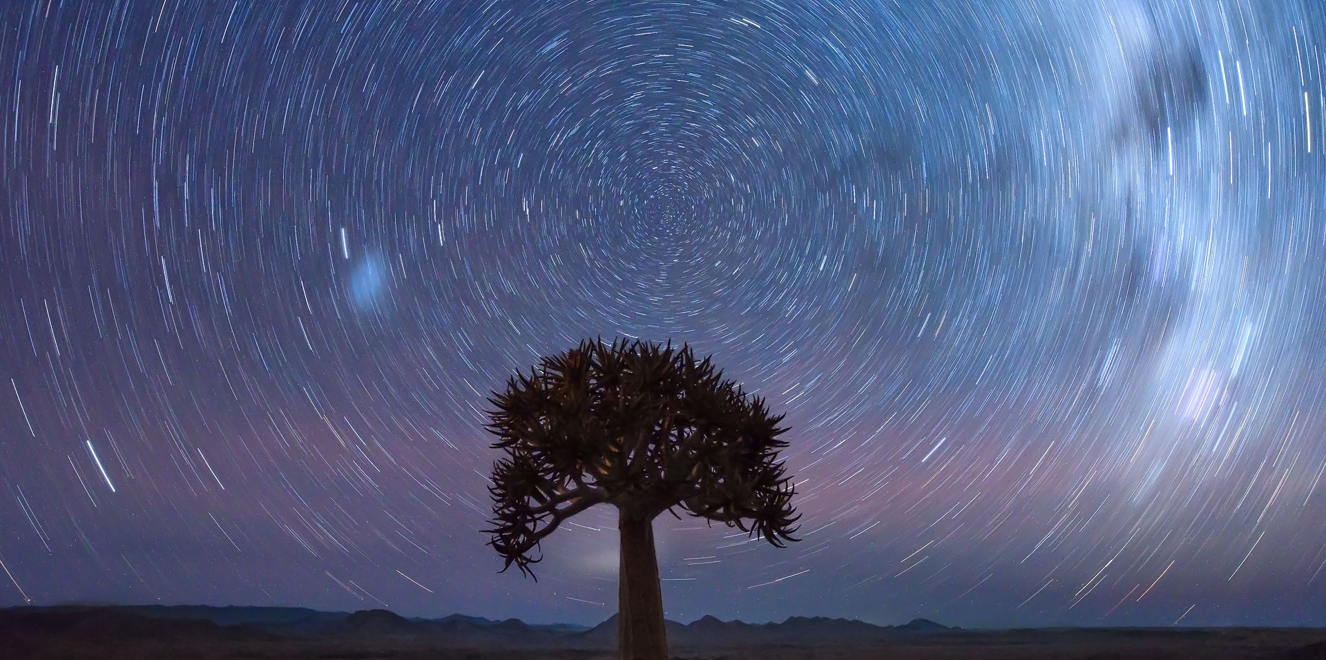 Quiver tree star trail