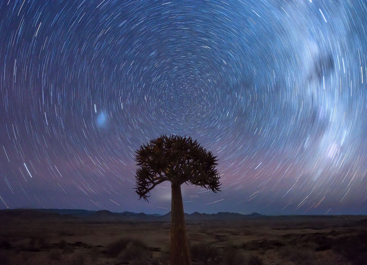 Quiver tree star trail